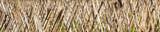 Fundo com estacas de bambu.