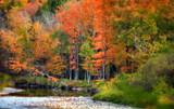 Autumn trees by stream in Vermont - 169643753