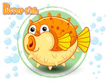 Cute Cartoon Puffer fish on a color background