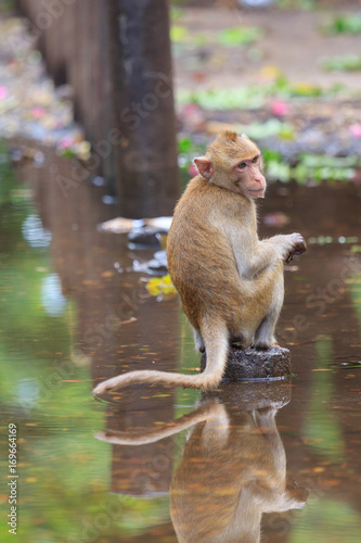 Aluminium Aap monkey in the park
