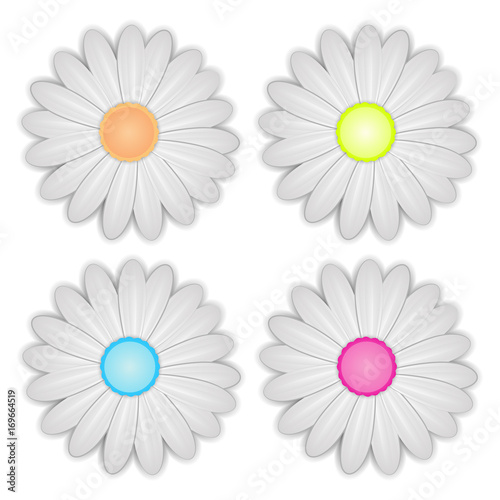 White Daisy flower on white background