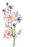 Beautiful wildflowers, bouquet, isolated  on a white - 169670189