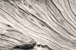 texture bois de vieille souche sépia  - 169671941