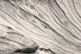 texture bois de vieille souche sépia