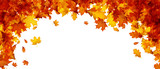 Autumn banner with orange leaves. - 169674577