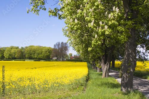 Foto op Canvas Oranje skåne landscape