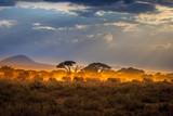 Migration of elephants. Herd of elephants. Evening in the African savannah.