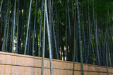Bamboo grove of Japanese garden, Kyoto Japan