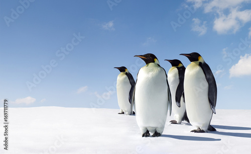 Papiers peints Antarctique Penguins