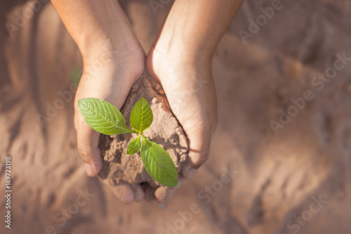 Foto Murales Hand holding young plant with soil on blur  background