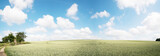 Green field and clear cloudy sky  panorama
