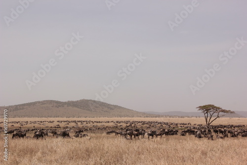 Fotobehang Donkergrijs Serengeti wildlife