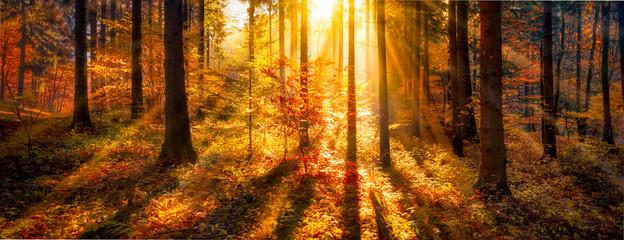 Sonnendurchflutete Waldlichtung im Herbst als Panorama