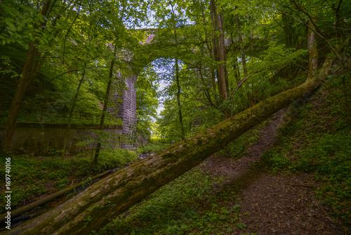 Fotobehang Weg in bos stary most