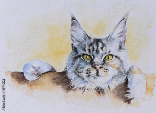 Plakat Maine Coon portrait.Picture created with watercolors.