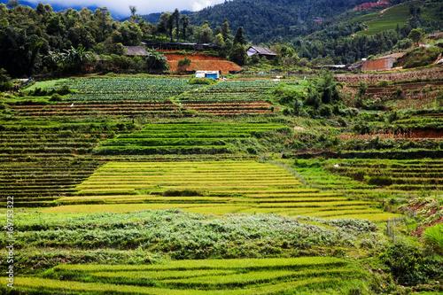 Fotobehang Rijstvelden green paddy fields around Ma Tra village in the summer, Sa Pa, Vietnam