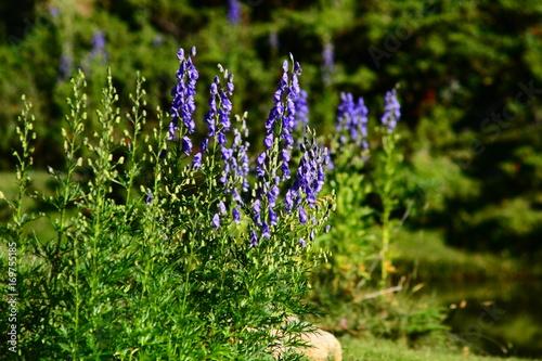 Aluminium Lavendel Flore de corse