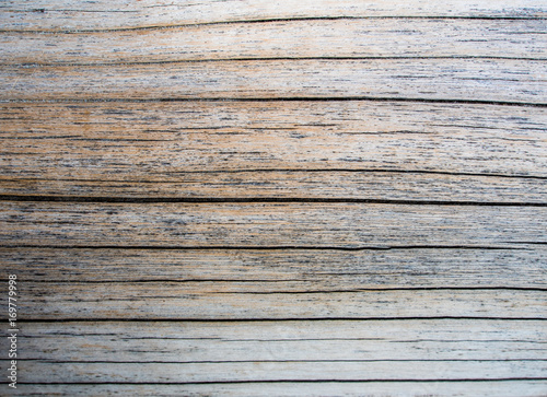 Texture of old stump wood surface