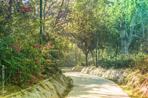 Fotobehang Olijf Parks, Forest, plants and green area wonderful landscape in New Delhi India