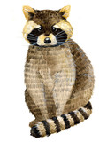 Watercolor illustration with little raccoon. Beautiful raccoon on a white background. Child illustration. - 169802901