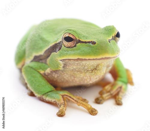 Fotobehang Kikker Green frog isolated.