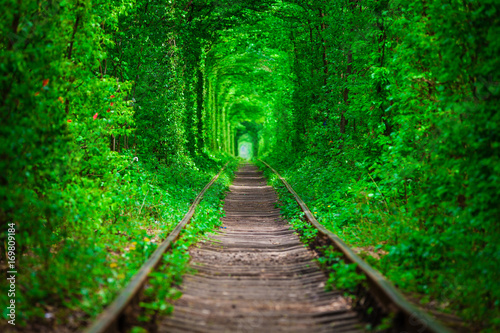 Foto op Canvas Groene a railway in the spring forest tunnel of love