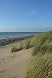 Sanddünen und Strandhafer an der Nordsee   mit dem Meer im Hintergrund - 169814735
