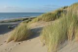 In der Mitte von Sanddünen an der Nordsee   mit dem Meer im Hintergrund
