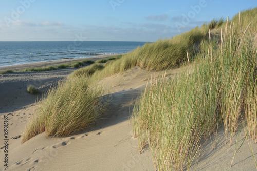 Tuinposter Noordzee In der Mitte von Sanddünen an der Nordsee mit dem Meer im Hintergrund