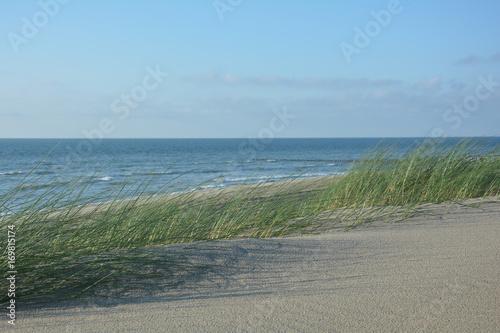 Foto op Plexiglas Noordzee Strandhafer im Wind - mit viel Sand und Nordsee