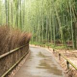 Path in Arashiyama Bamboo Forest in Kyoto
