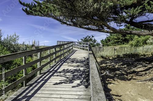 Fotobehang Weg in bos Chemin dans les dunes accès à la plage