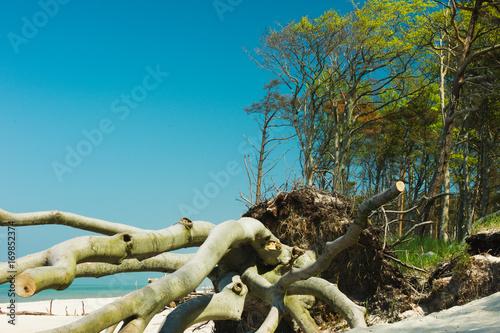 Papiers peints La Mer du Nord Umgefallener Baum am Strand