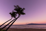 Palm Trees Silhouetted Against a Maui Sunset