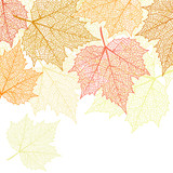 Nature banner with autumn leaves  - 169869778