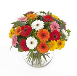 bouquet of colored gerberas in vase isolated on white background - 169871792