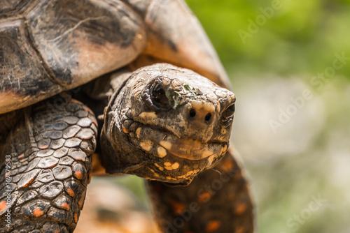 Aluminium Schildpad Tortoise Profile