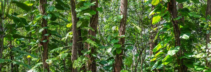 Fundo verde com plantas.
