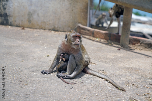 Aluminium Aap Mother Monkey with her baby