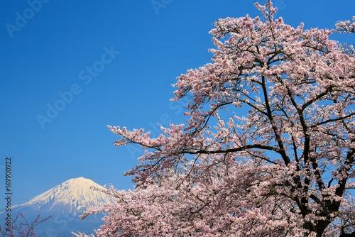 富士山と桜 Poster