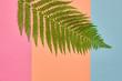 Fashion Tropical Floral Leaf Concept. Design. Art Gallery. Minimal. Green Tropical Fern Leaf. Autumn fashion. Pastel colors