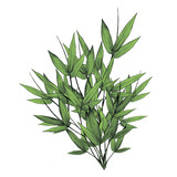 bamboo leaves a lot of sketch vector graphics illustration color greens