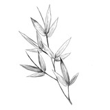 bamboo leaves sketch vector graphics monochrome bitmap greens black-and-white
