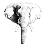 elephant head sketch vector graphics black and white monochrome pattern