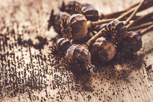 Dried poppy heads and seeds. Poster