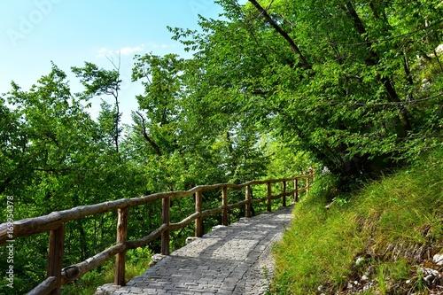 Papiers peints Route dans la forêt path in park trees around with no people