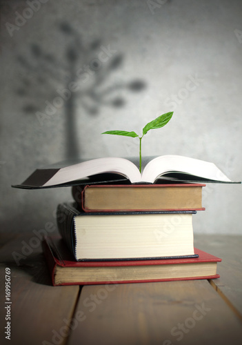 Open book seedling with tree shadow