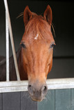 Horse in stable - 169964557