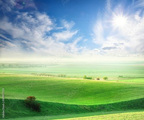Foto op Plexiglas Blauwe hemel Wavy field with a green grass