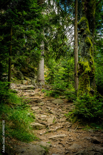 Fotobehang Weg in bos Weg am Kaitersberg im Zellertal